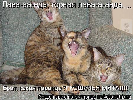 Котоматрица: Лава-аа-нда, горная лава-а-анда.... Брат, какая лаванда?! КОШАЧЬЯ МЯТА!!!!