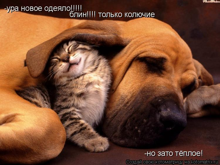 Котоматрица: -ура новое одеяло!!!!! блин!!!! только колючие -но зато тёплое!