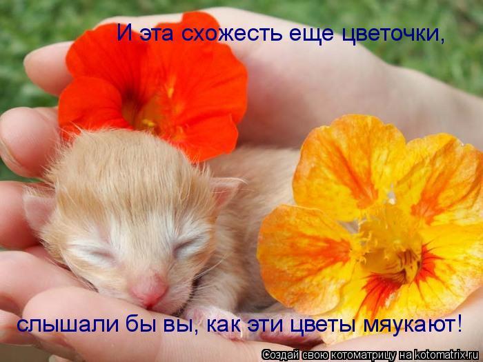 Котоматрица: И эта схожесть еще цветочки, слышали бы вы, как эти цветы мяукают!