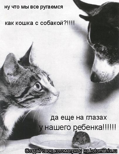 Котоматрица: ну что мы все ругаемся  как кошка с собакой?!!!! да еще на глазах у нашего ребенка!!!!!!