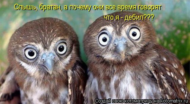 Котоматрица: Слышь, братан, а почему они все время говорят  что я - дебил???