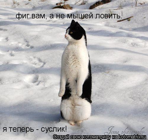 Котоматрица: фиг вам, а не мышей ловить. я теперь - суслик!
