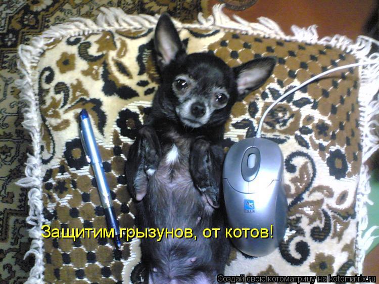 Котоматрица: Защитим грызунов, от котов!