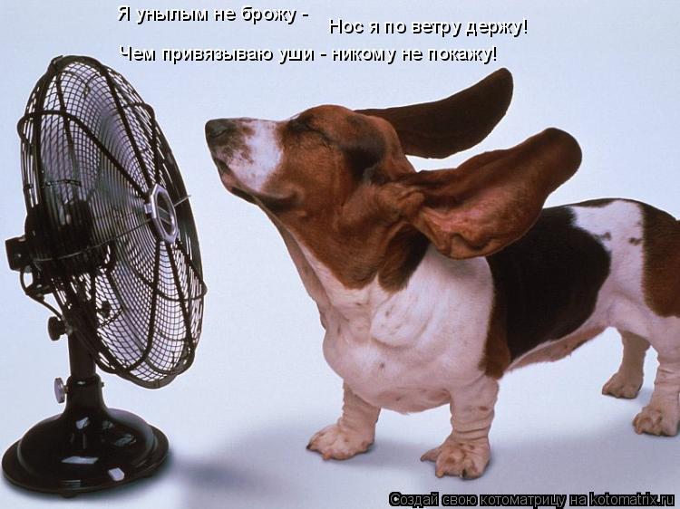 Котоматрица: Я унылым не брожу -  Нос я по ветру держу!  Чем привязываю уши - никому не покажу!