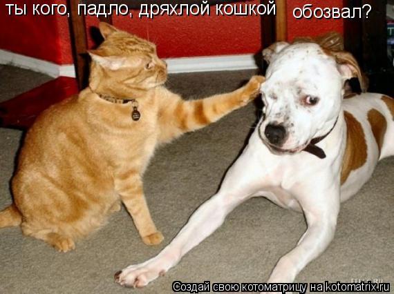 Котоматрица: ты кого, падло, дряхлой кошкой обозвал?