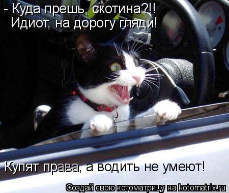 Котоматрица: - Куда прешь, скотина?!! Идиот, на дорогу гляди! Купят пр ава , а водить не умеют!
