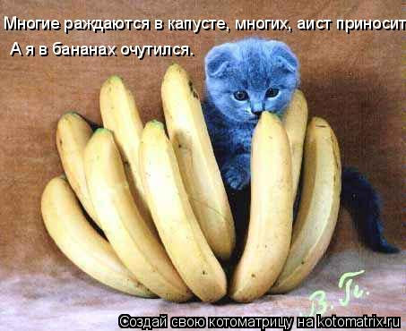 Котоматрица: Многие раждаются в капусте, многих, аист приносит. А я в бананах очутился.