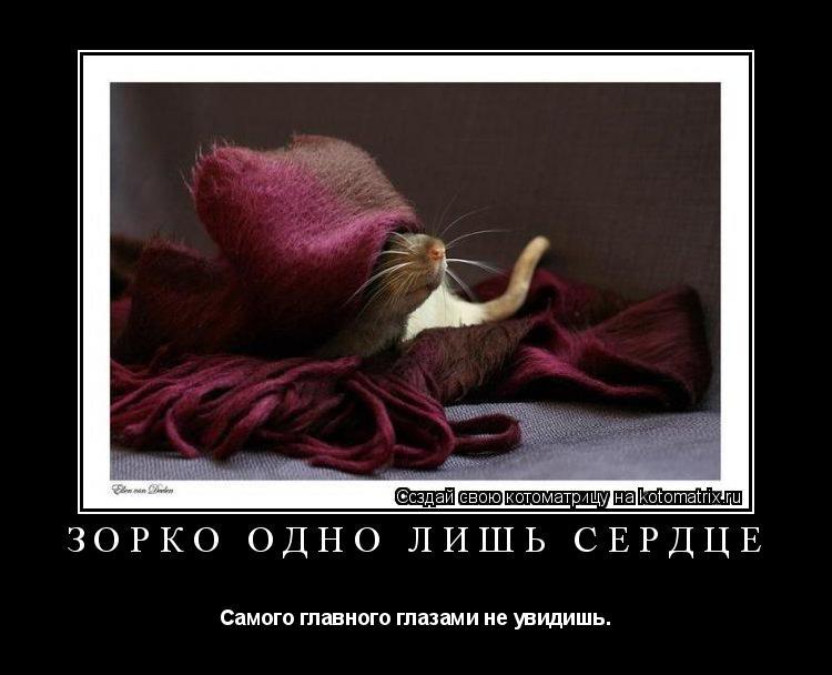 Котоматрица: Зорко одно лишь сердце Самого главного глазами не увидишь.