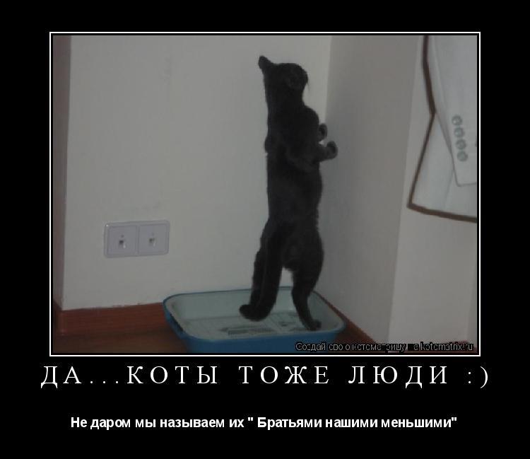 """Котоматрица: Да...Коты тоже люди :) Не даром мы называем их """" Братьями нашими меньшими"""""""