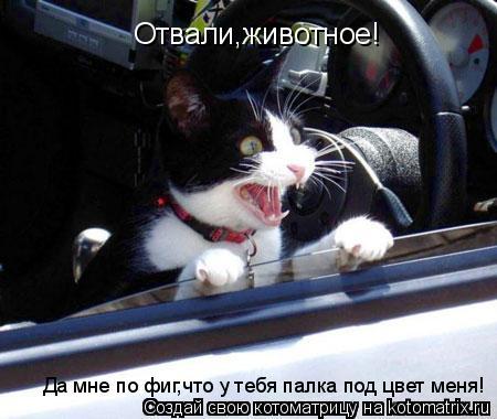 Котоматрица: Отвали,животное! Да мне по фиг,что у тебя палка под цвет меня!