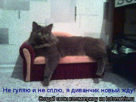 Котоматрица: Не гуляю и не сплю, я диванчик новый жду!