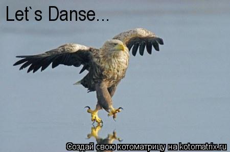 Котоматрица: Let`s Danse...