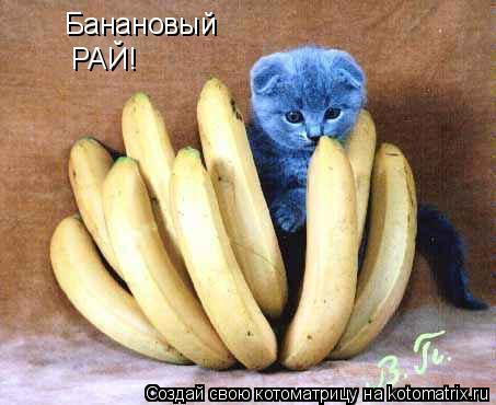 Котоматрица: Банановый РАЙ!