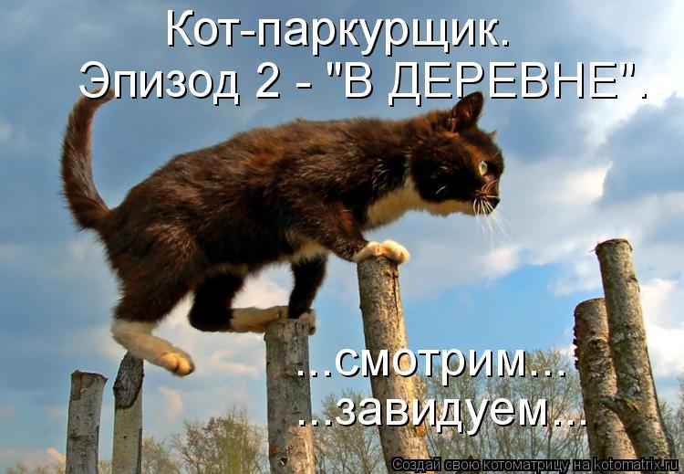 скачать кота паркурщика через торрент - фото 6