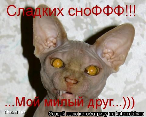 Котоматрица: ...Мой милый друг...))) Сладких сноФФФ!!! Chekist i.ua