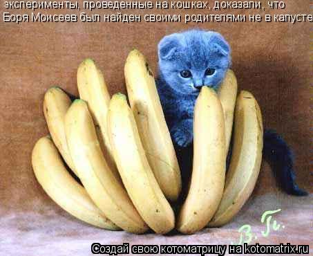 Котоматрица: эксперименты, проведенные на кошках, доказали, что  Боря Моисеев был найден своими родителями не в капусте.