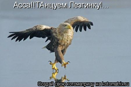 Котоматрица: Асса!!ТАнцуем Лезгинку!...