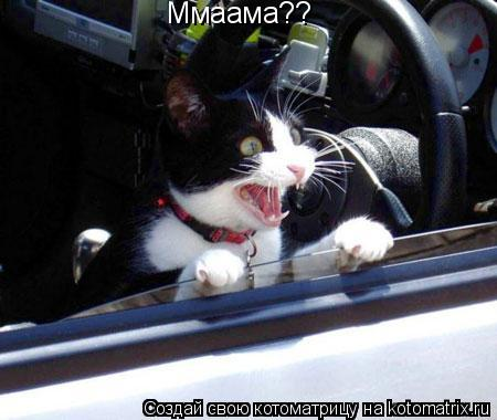 Котоматрица: Ммаама??