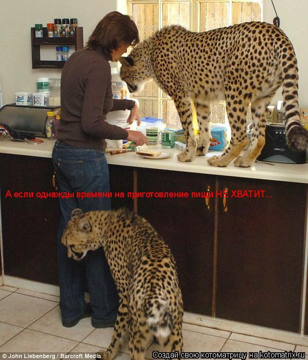 Котоматрица: А если однажды времени на приготовление пищи НЕ ХВАТИТ...