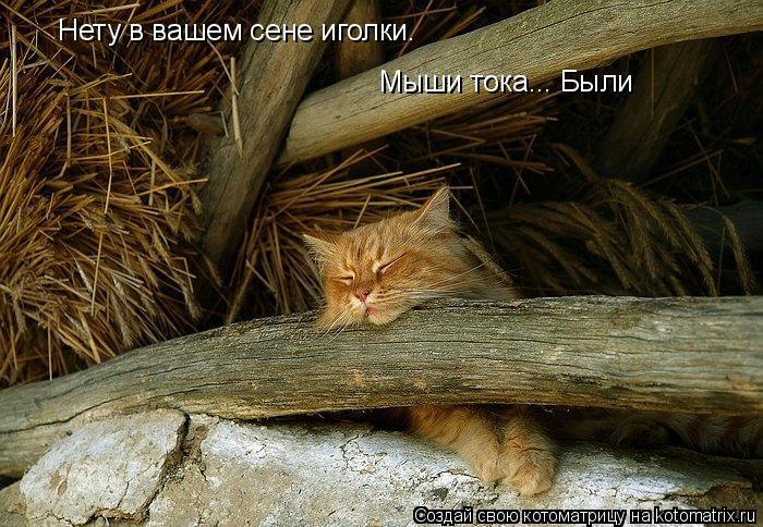 Котоматрица: Нету в вашем сене иголки. Мыши тока... Были