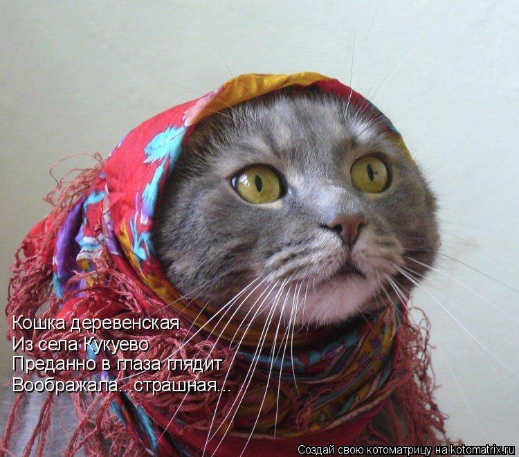 Котоматрица: Кошка деревенская Из села Кукуево Преданно в глаза глядит Воображала...страшная...