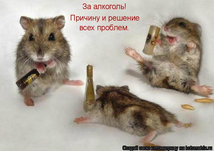 Котоматрица: За алкоголь! Причину и решение всех проблем.