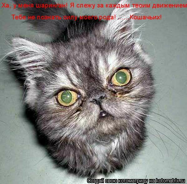 Котоматрица: Ха, у меня шаринган! Я слежу за каждым твоим движением! Тебе не познать силу моего рода! ......Кошачьих!