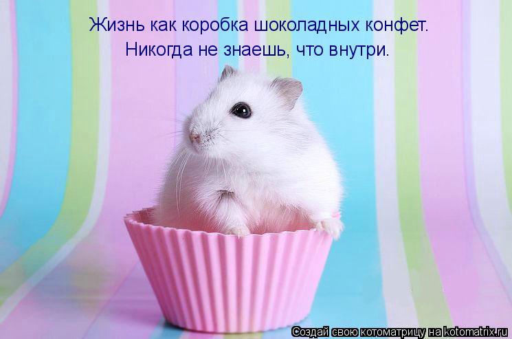 Котоматрица: Жизнь как коробка шоколадных конфет. Никогда не знаешь, что внутри.