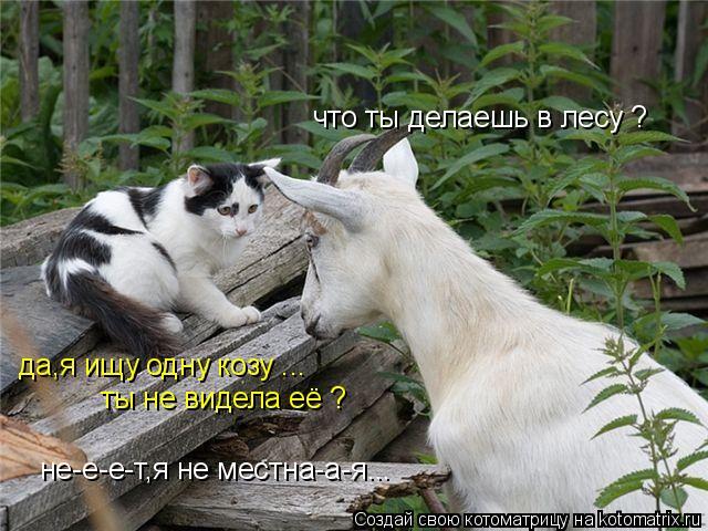 Котоматрица: что ты делаешь в лесу ? да,я ищу одну козу ... ты не видела её ? не-е-е-т,я не местна-а-я...