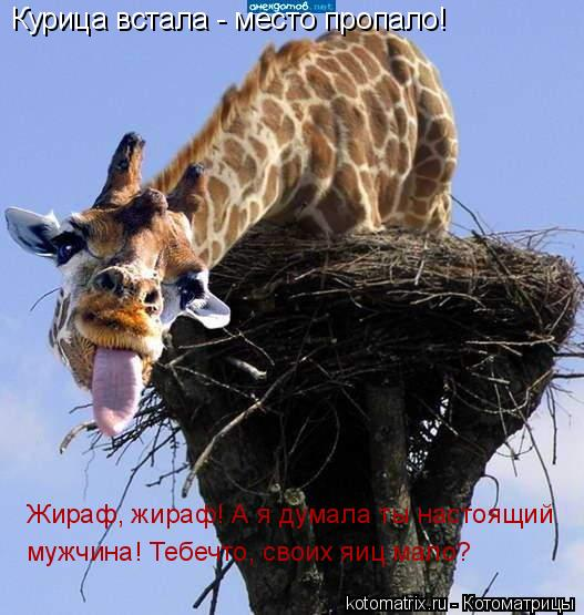 Котоматрица: Курица встала - место пропало! Жираф, жираф! А я думала ты настоящий мужчина! Тебечто, своих яиц мало?