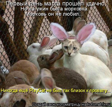 Котоматрица: Первый день марта прошёл удачно. Но на ужин была морковка. Морковь он не любил... Никогда ещё PlayCat не был так близок к провалу...