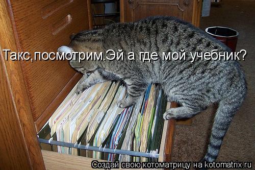 Котоматрица: -Такс,посмотрим.Эй а где мой учебник? Такс,посмотрим.Эй а где мой учебник?