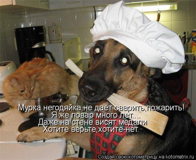 Котоматрица: Мурка негодяйка,не даёт сварить,пожарить! Я же повар много лет.... Даже на стене висят медали Хотите верьте,хотите-нет.