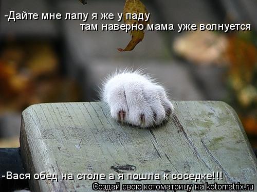 Котоматрица: -Дайте мне лапу я же у паду там наверно мама уже волнуется -Вася обед на столе а я пошла к соседке!!!