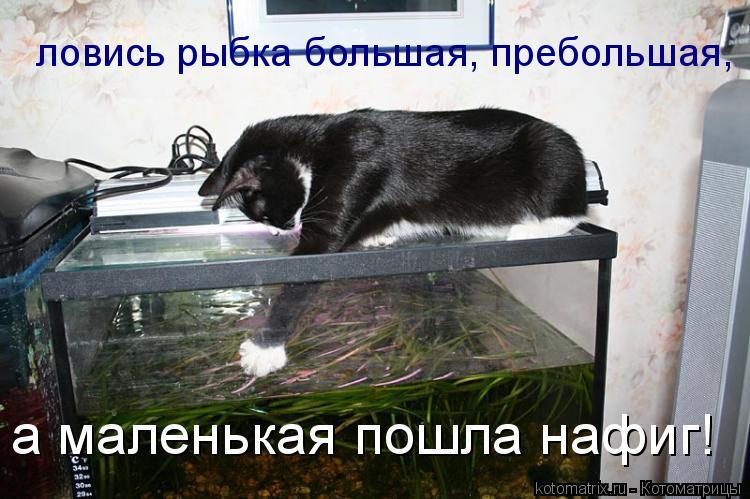 Котоматрица: ловись рыбка большая, пребольшая, а маленькая пошла нафиг!