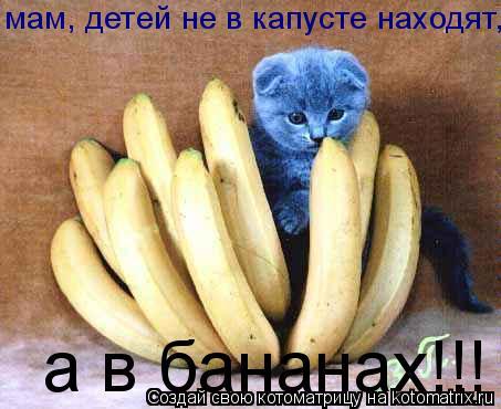 Котоматрица: мам, детей не в капусте находят, а в бананах!!!