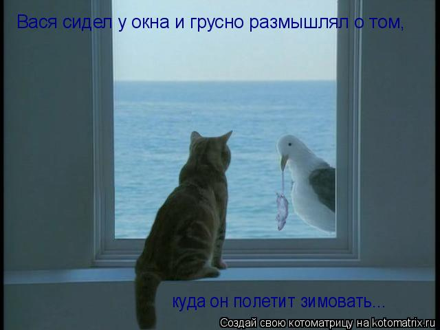 Котоматрица: Вася сидел у окна и грусно размышлял о том, куда он полетит зимовать...