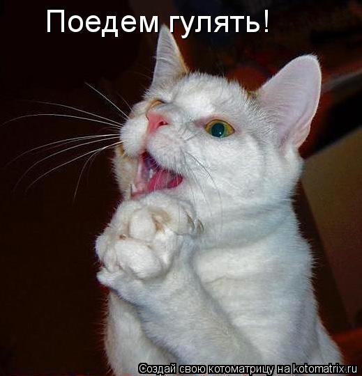 Котоматрица: Поедем гулять!