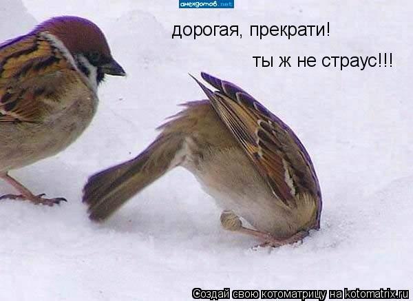 Котоматрица: дорогая, прекрати! ты ж не страус!!!