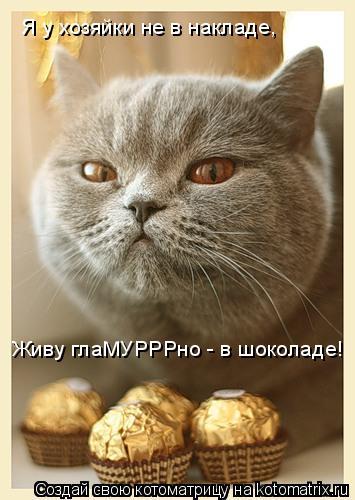 Котоматрица: Я у хозяйки не в накладе, Живу глаМУРРРно - в шоколаде!
