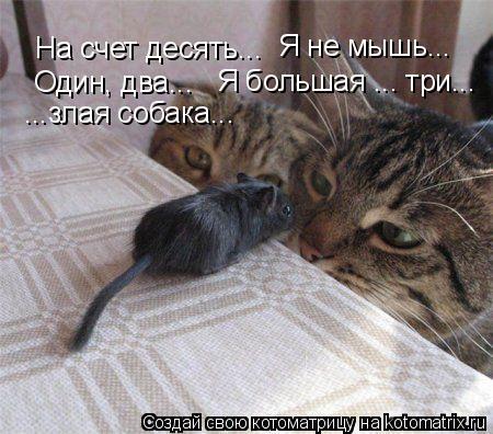 Котоматрица: На счет десять... Я не мышь...  Один, два...  Я большая ... три... ...злая собака...