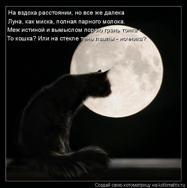 Котоматрица: На вздоха расстоянии, но все же далека Луна, как миска, полная парного молока. Меж истиной и вымыслом порою грань тонка -  То кошка? Или на сте