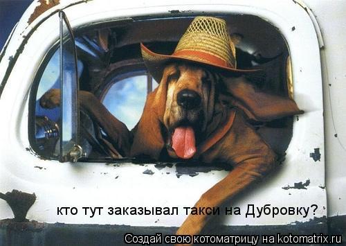 Котоматрица: кто тут заказывал такси на Дубровку?