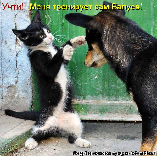 Котоматрица: Учти!  Меня тренирует сам Валуев!