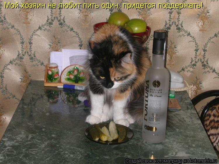 Котоматрица: Мой хозяин не любит пить один, придется поддержать!