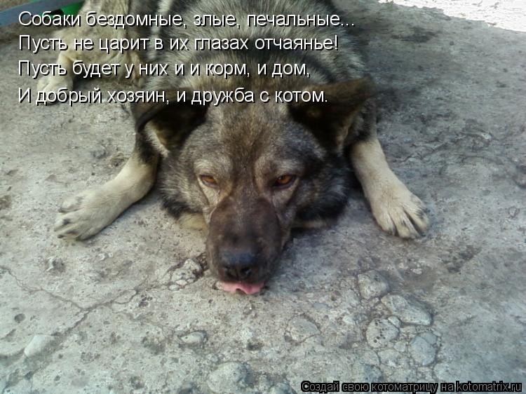 Котоматрица: Собаки бездомные, злые, печальные... Пусть не царит в их глазах отчаянье! Пусть будет у них и и корм, и дом, И добрый хозяин, и дружба с котом.