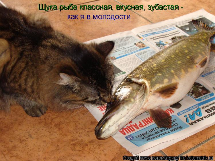 Котоматрица: Щука рыба классная, вкусная, зубастая -  как я в молодости