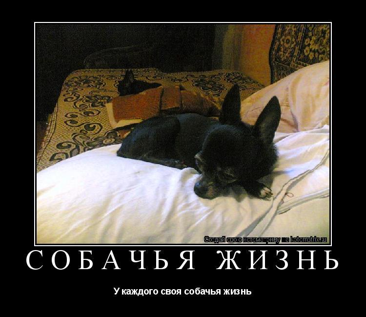 Котоматрица: Cобачья жизнь У каждого своя собачья жизнь