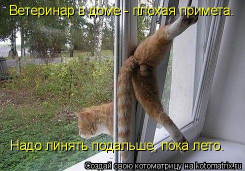 Котоматрица: Ветеринар в доме - плохая примета. Надо линять подальше, пока лето.