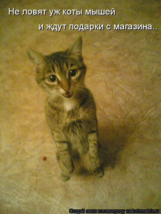 Котоматрица: Не ловят уж коты мышей  и ждут подарки с магазина..